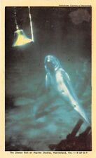 MARINELAND FLORIDA FL  DINNER BELL AT MARINE STUDIOS POSTCARD