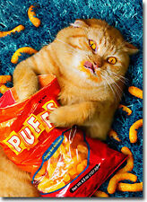 Cheese Puff Cat Stand Out Pop Up Birthday Card - Greeting Card by Avanti Press