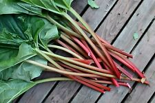 A 1g (approx. 70) rhubarb seeds RHEUM RHABARBARUM heirloom healthy vegetable