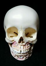SOMSO - QS3/2 Artificial Skull of Child Anatomical Model, 2 part (QS 3/2)