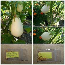 Eggplant - Aubergine ''White Oblong'' ~50 Top Quality Seeds - Productive