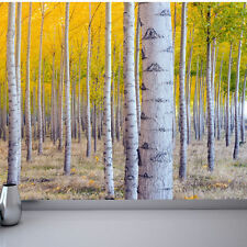WALLPAPER MURAL SILVER BIRCH FOREST TREES WALL PAPER 300cm wide 240cm tall WM219