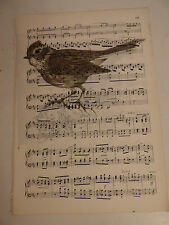 Vintage music sheet printed bird picture, wall art, antique, Skylark