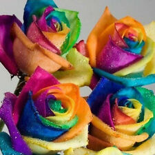 200 Pieces Cool Colorful Rainbow Rose Flower Seeds Garden Yard Rare Plants Decor