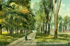 Schenectady, NY Lovers Lane in Union College Grove 1910