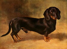 1906 Cheviot~ Short Haired Dachshund Puppy Dog~ Black & Brown~NEW Lge Note Cards