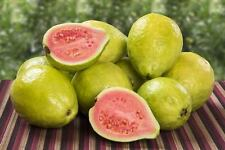 PSIDIUM GUAJAVA - GUAVA, 50 HIGH QUALITY SEEDS