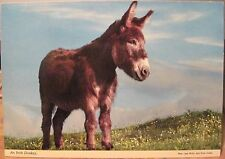 Irish Postcard AN IRISH DONKEY Farm Animal Ireland Joan Willis John Hinde 2/336