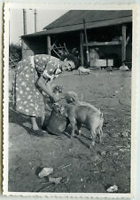 PHOTO ANCIENNE - COCHON FERME FEMME NOURRISSAGE - PIG EATING - Vintage Snapshot