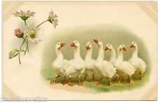 HELENA MAGUIRE . Les oies . Goose . Geese