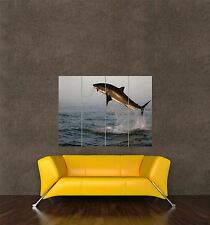 POSTER PRINT PHOTO NATURE ANIMAL FISH GREAT WHITE SHARK BREACHING OCEAN SEB339