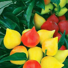 20 Ornamental Pepper Seeds Saturn Peach Shape Capsicum Organic Vegetables B079