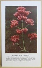 circa 50's / 60's Collectors Card - Cassell's Nature Cards Series A # 21