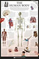 The Human Body Poster Anatomy Medical Wall Chart 61x91cm Spine Heart Lung Brain