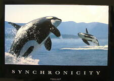 "WALE POSTER ""ORKA SYNCHRONICITY - KILLERWALE WHALES"""