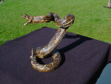 DIAMOND BACK RATTLESNAKE FOR DISPLAY i559-560-561
