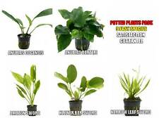 5 Potted Live Aquarium Plants Bundle - Anubias, Amazon Sword, Kleiner Bar, etc