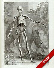 BIZZARE POSING SKELETON W RHINO ENGRAVING PAINTING ART REAL CANVAS GICLEE PRINT