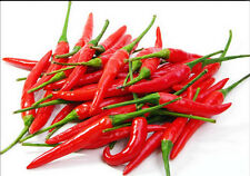 30 SEEDS THAI RED CHILI PEPPER VERY HOT free shipping