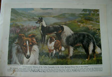 Vintage E Miner Shetland Sheepdog Collie bookplate 1941 National Geographic Mag