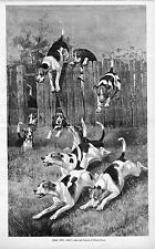 DOGS BEAGLE OR FOXHOUNDS JUMPING FENCE CHASING FOX HUNTING ANTIQUE ENGRAVING