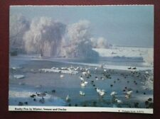 POSTCARD GLOUCESTERSHIRE RUSHY PEN IN WINTER SWANS & DUCKS