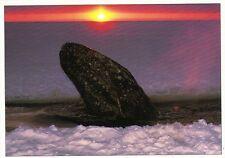 Ansichtskarte: Buckelwal taucht zwischen Eisschollen auf - Humpback Whale in ice