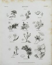 1802 Botánica clases grabado impresión Rees Placa Ii