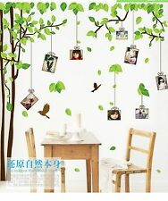 "Large Green 71""X118"" Photo frame Family Tree Removable Wall Decal Stickers Decor"