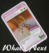 Woolworths   AUSSIE ANIMALS  Card 72/108 YOUR BACKYARD Golden Orb-Weaving Spider
