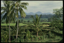 202002 Typical Balinese Countryside A4 Photo Print