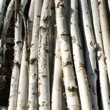 "White Birch-5 Poles/Logs - 2.5"" to 3.0"" D x 6ft"