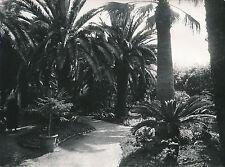 ÎLE DE CORFOU c. 1935 - Achilléion Les Jardins  Palmiers  Grèce - Div 8224