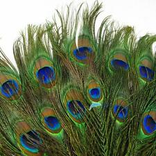 50pcs lots Real Natural Peacock Tail Eyes Feathers 8-12 Inches/about 23-30cm TL