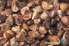 100+ Seeds (10GR) Viable Argyreia nervosa Hawaiian baby woodrose Hawaiian Strain