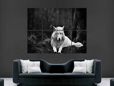 WHITE WOLF WILD ANIMAL ART HUGE  LARGE PICTURE POSTER GIANT