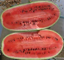50 Seeds Charleston Grey Watermelon Seeds new seed for 2017 Non-GMO Heirloom