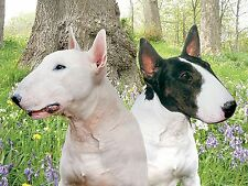 3D Picture DogsPair of Bull Terriers Size 39 x 29 cm approx New