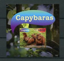 Guyana 2015 MNH Capybaras 1v S/S Rodents Wild Animals Stamps