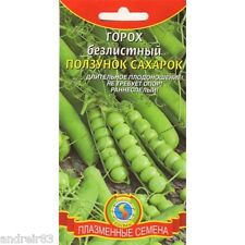 Peas Seeds Slider sugar 5 g Горох Ползунок сахарок Ukraine S0979