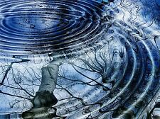 NATURE POND RIPPLE WATER CONCENTRIC TREE REFLECT POSTER PRINT BB209A
