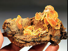 "New Find! 4"" Wulfenite Blades on Matrix, Eruption Mine, Chihuahua, Mexico! W250"