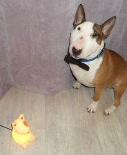 English Bull Terrier Lamp LED Patchy The Dog Night Light will post worldwide NEW