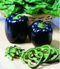 5 Black Deep Purple Pepper Seeds Bell Sweet Pepper F1 Vegetable seed