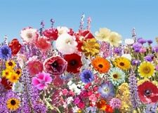 1,000 Wildflower Seeds Early Wildflower Mix Flower Seed Mix