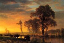 """Art Oil painting Western Kansas Travelers cows cross the river in sunset 24""""x36"""""""