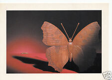 Sculpture Postcard - Wooden Butterfly - Richard Burbidge Decorative Timber A6297