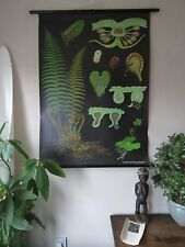 VINTAGE PULL ROLL DOWN BOTANICAL SCHOOL CHART OF FERN JUNG KOCH QUENTELL