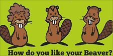 HOW DO YOU LIKE YOUR BEAVER FUNNY DECAL COVER STICKER SKIN FREE POST