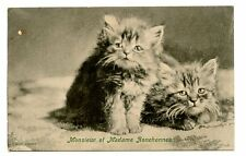 vintage cat postcard Tuck's cute cats kittens Monsieur et Madame Ronchonneau